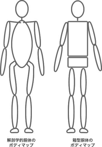 胴体のボディマップの比較