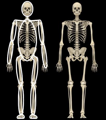 骨格とボディマップ